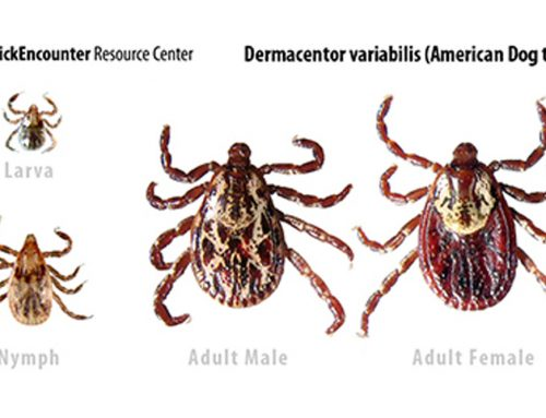 Tick Identification and Information